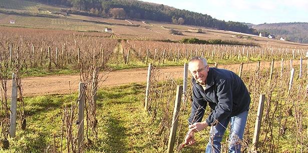 Wijnverhaal Domaine Thierry Mortet - 1