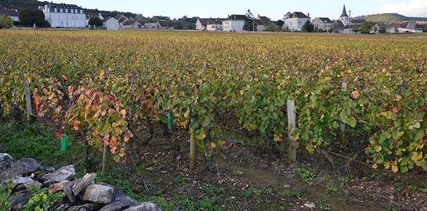 Wijnverhaal Henri Clerc Pommard - 2