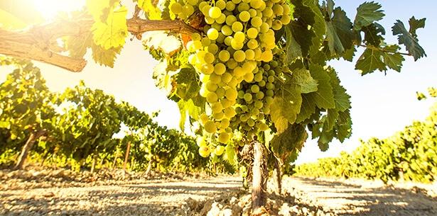 Wijnverhaal Domaine des Tourels Chardonnay - 2