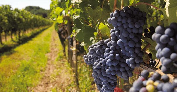 Wijnverhaal Chateau Mauleon Côtes du Roussillon 2