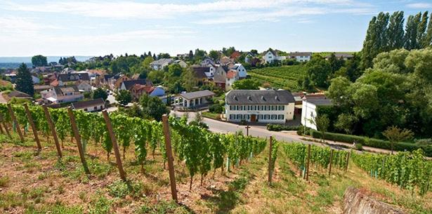 Wijnverhaal Weingut Johannishof Riesling Feinherb - 2