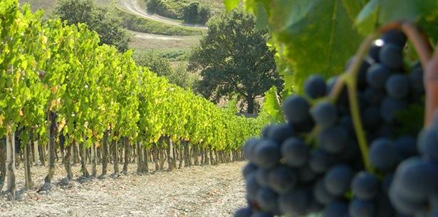 Wijnverhaal Onorio - 2