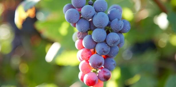 Wijnverhaal Manieri Monferrato 2016 - 1