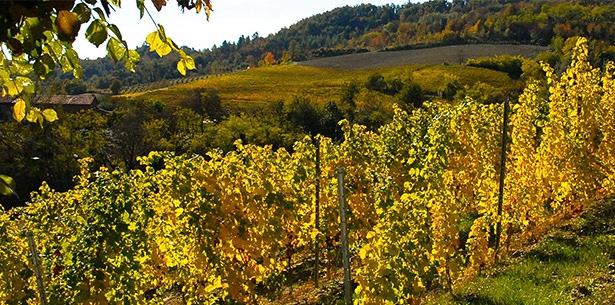 Wijnverhaal Manieri Monferrato 2016 - 2