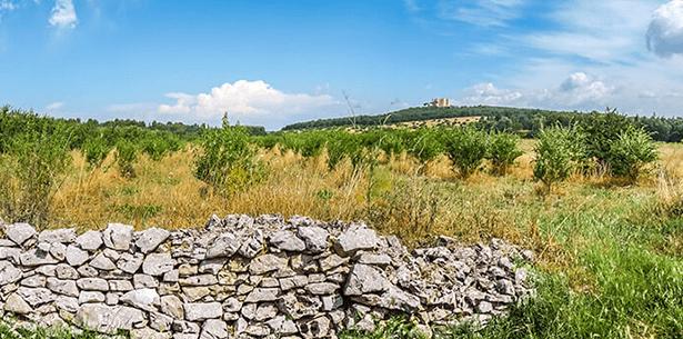 Wijnverhaal Vignuolo Rosso Castel del Monte 2