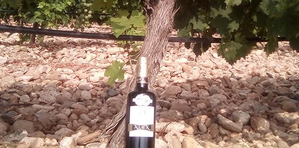 Wijnverhaal Alex Navarra - 2