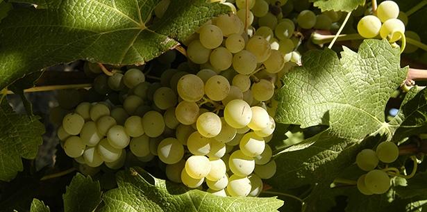 wijnverhaal Casas del Toqui Chardonnay Reserva - 2