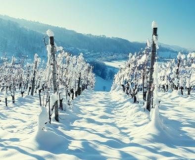 Winterwijnen