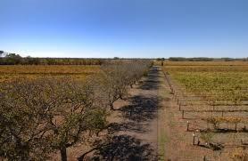Brand's Laira vineyards
