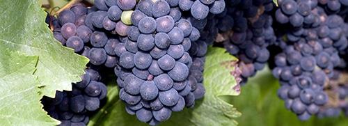 Crianza wijnen