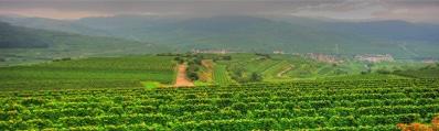 Wijn uit Baden
