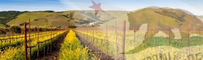 Wijn uit Californië