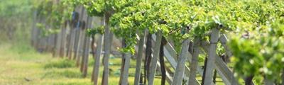 Wijn uit Sancerre